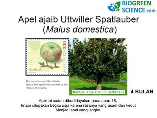 khasiat-apple-stem-cell